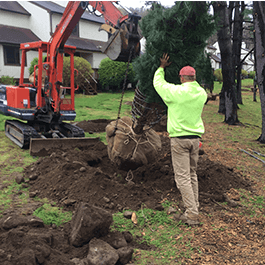 <p>From tree and shrub design and installation to hydroseeding and planter bed installation, we can help you transform your landscape.</p>