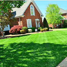 <p>Build a thick, beautiful, lawn with our tailored lawn care programs that include weed and insect control, aeration, and more.</p>