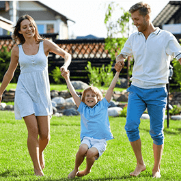 <p></noscript>Get everything your lawn needs to look it's best without the use of chemical fertilizers and pesticides!</p>