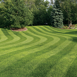<p></noscript>Hassle-free lawn mowing, trimming, blowing services to take the stress out of your lawn.</p>